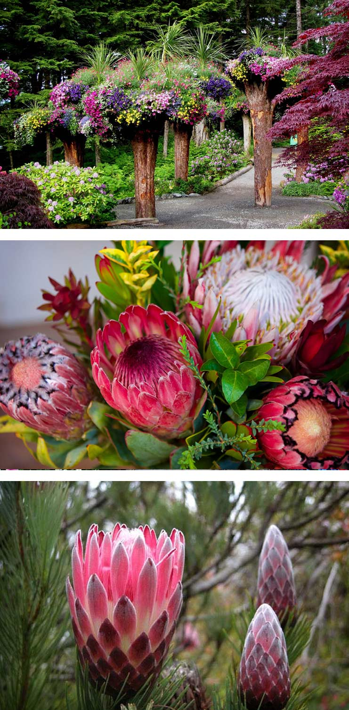 Ботанический сад Кирстенбош