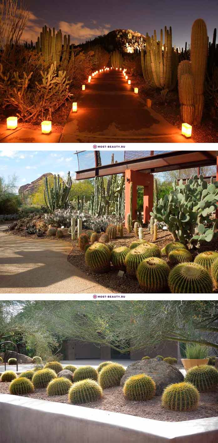 Ботанический сад пустыни