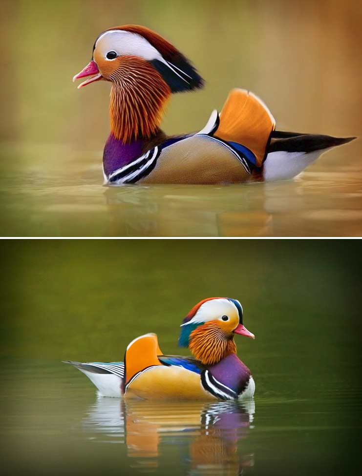 Мандаринка-утка