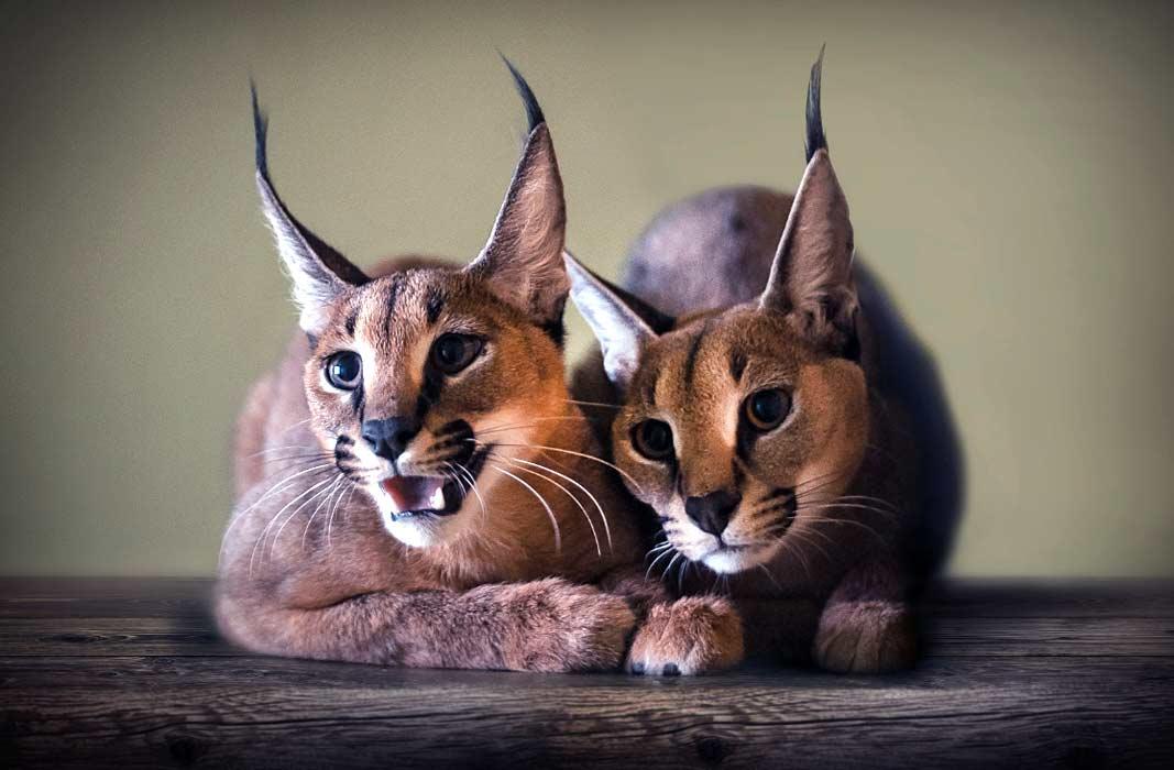 Самые красивые животные планеты (  24 ФОТО)