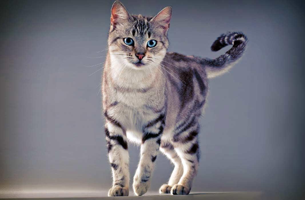 фото красивые кошки