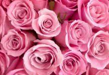 ТОП-розы
