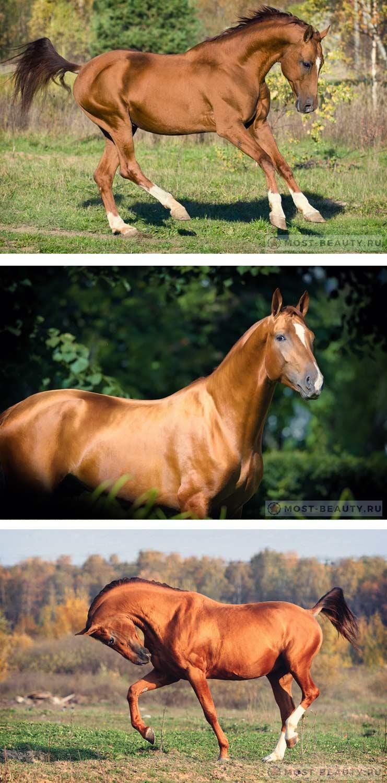 Донская - Самые красивые лошади