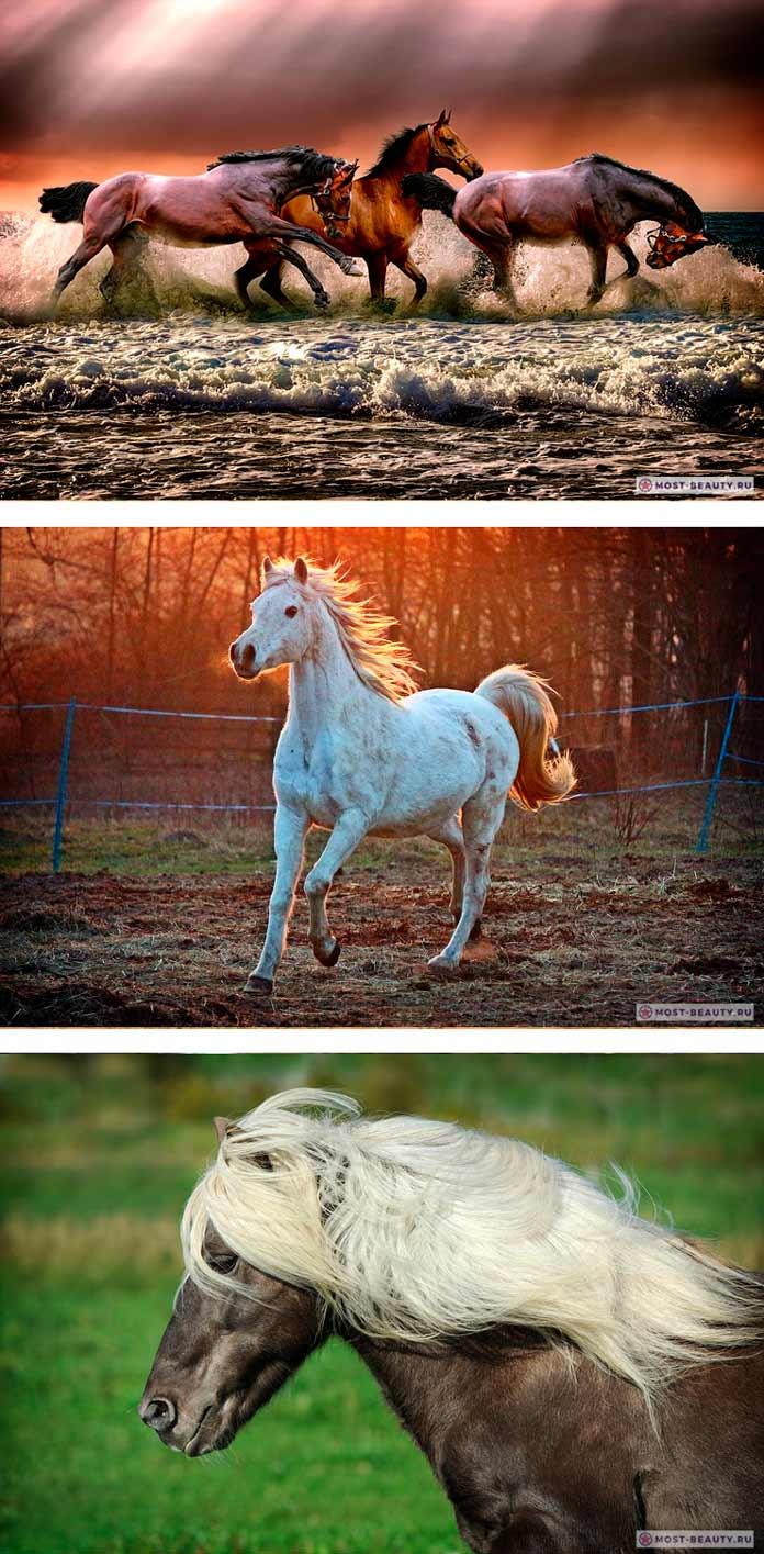 Фото красивых лошадей CC0