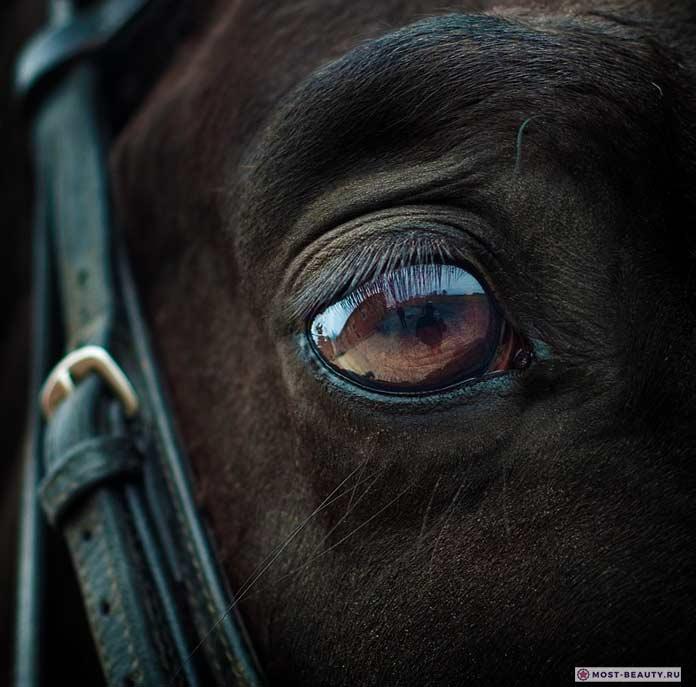 Глаз лошади - Самые красивые лошади