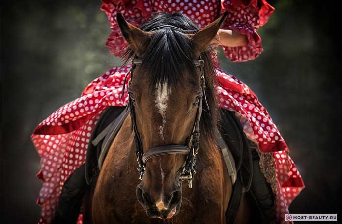 Самые красивые лошади в мире CC0