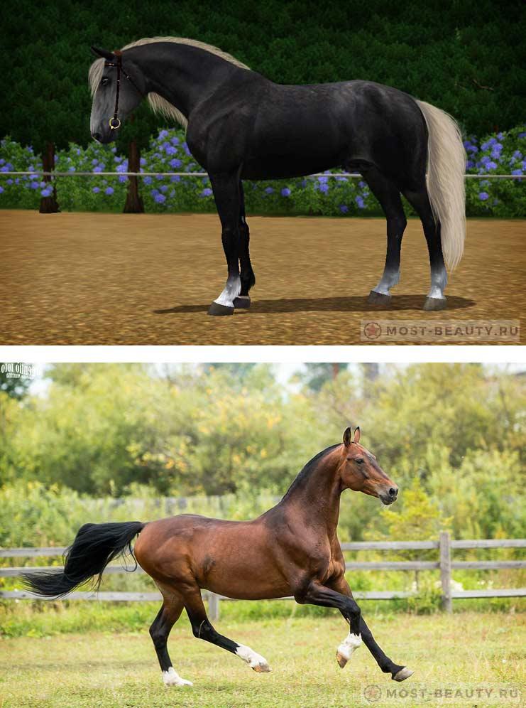 Орловский рысак - самые красивые кони