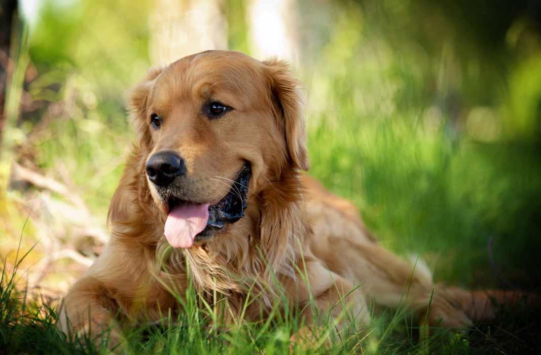 ТОП самые красивые собаки в мире
