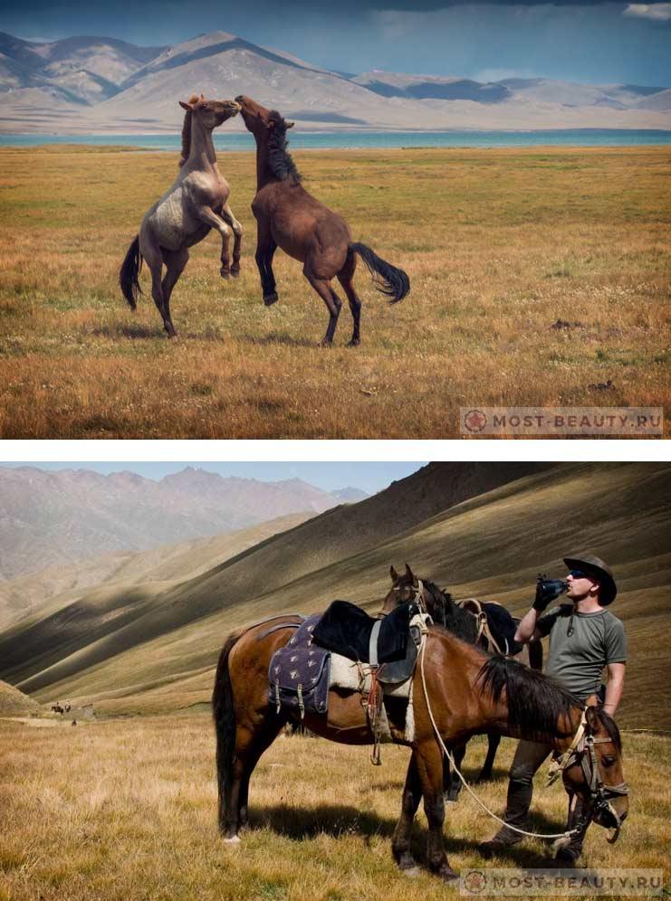 киргизская порода - Самые красивые лошади