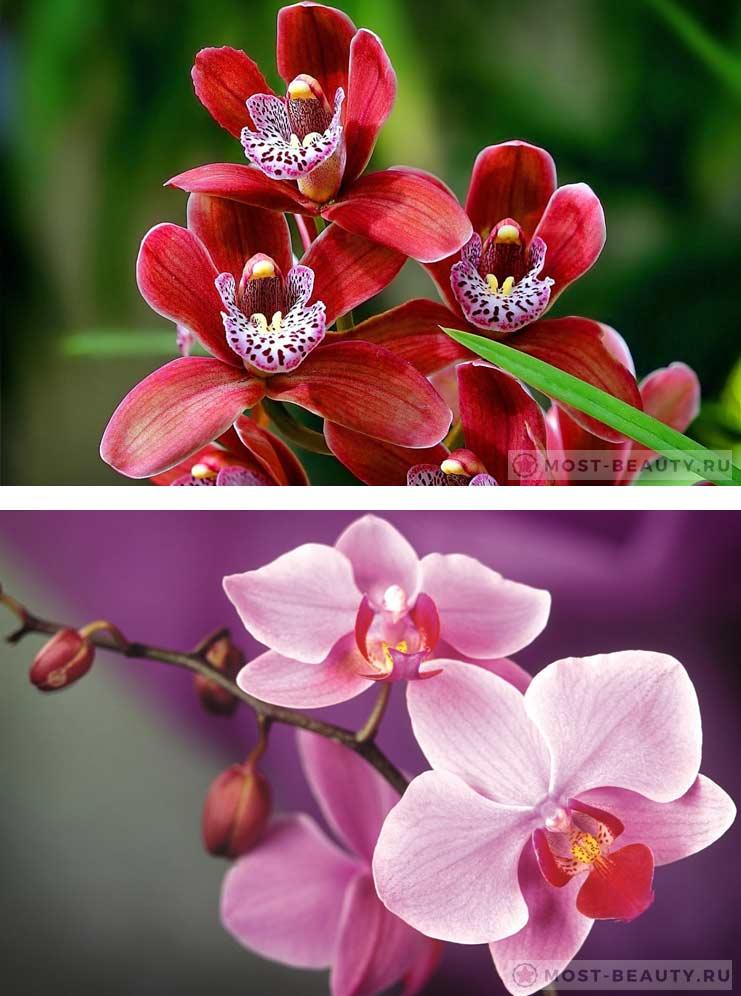Картинки красивые про цветы