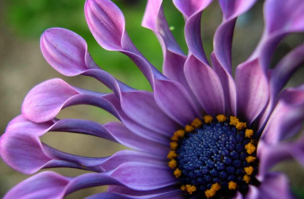 Какие бывают цветы: названия, фото, виды, домашние, комнатные, садовые, цветущие все лето, многолетние, весенние, луковичные, неприхотливые, растения
