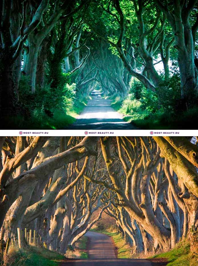 Буковый темный тоннель в Северной Ирландии