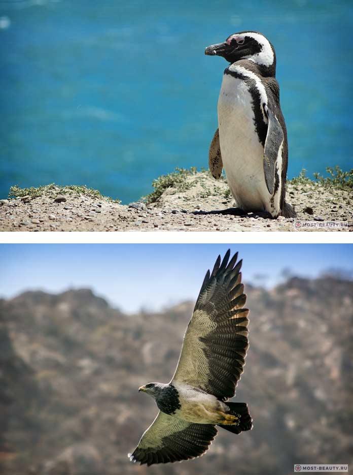 Самые красивые страны: Животные Аргентины (CC0)