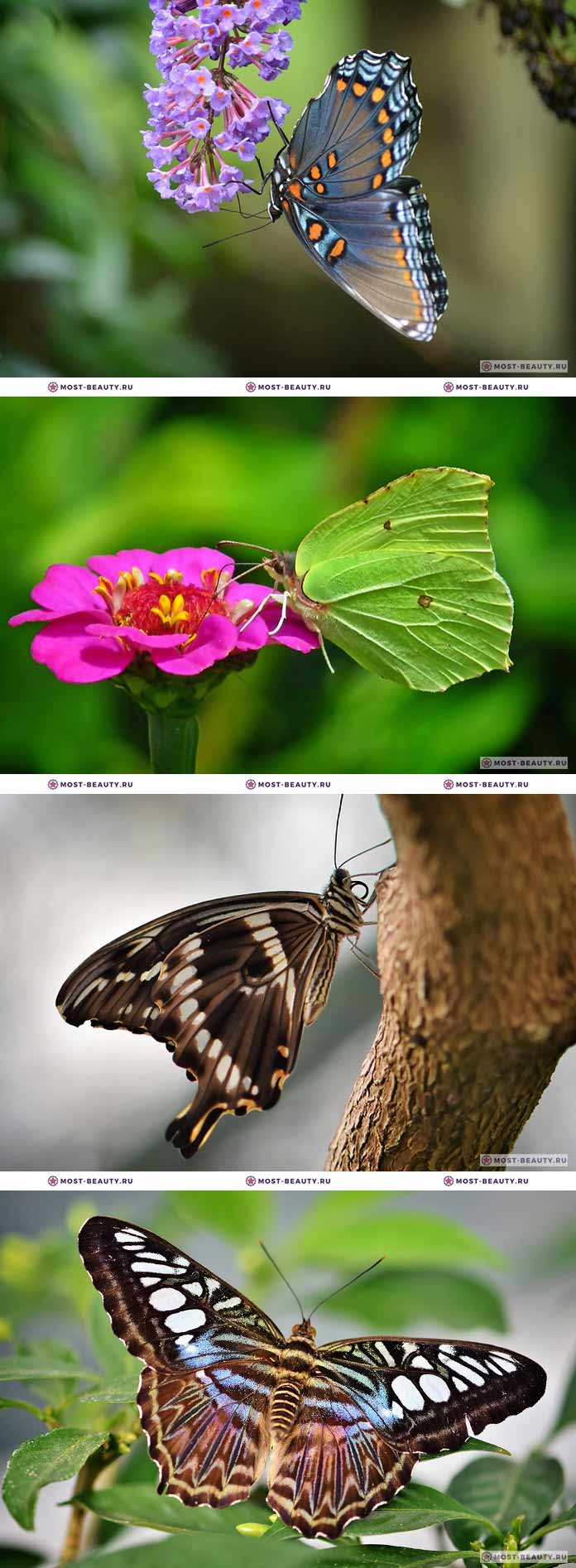 Красивые фотографии бабочек (CC0)