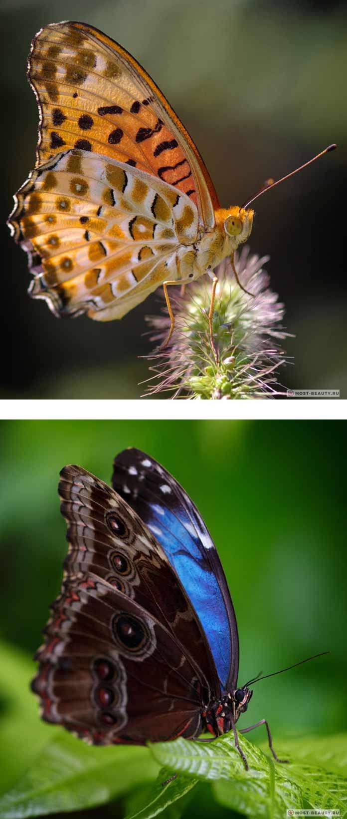Самые красивые бабочки (CC0)
