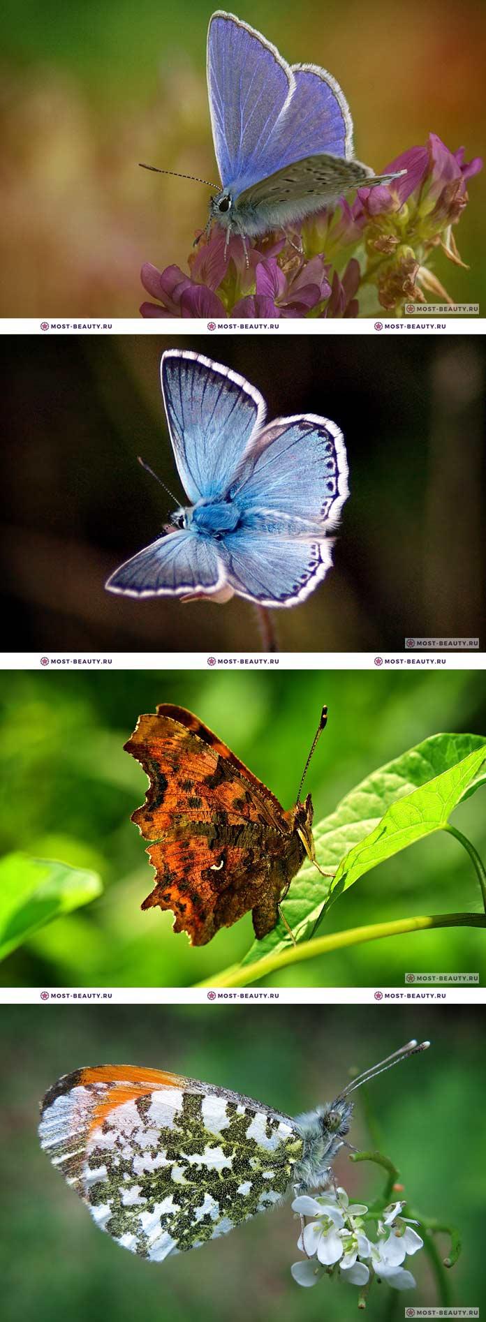 Самые красивые бабочки на фото (CC0)
