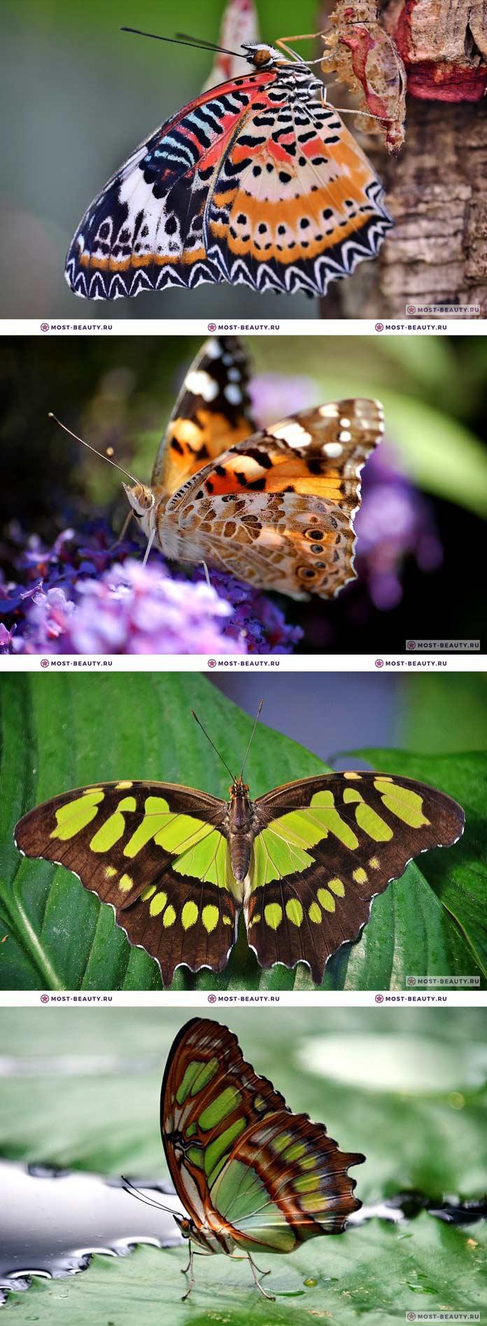 Фотографии красивых бабочек (CC0)