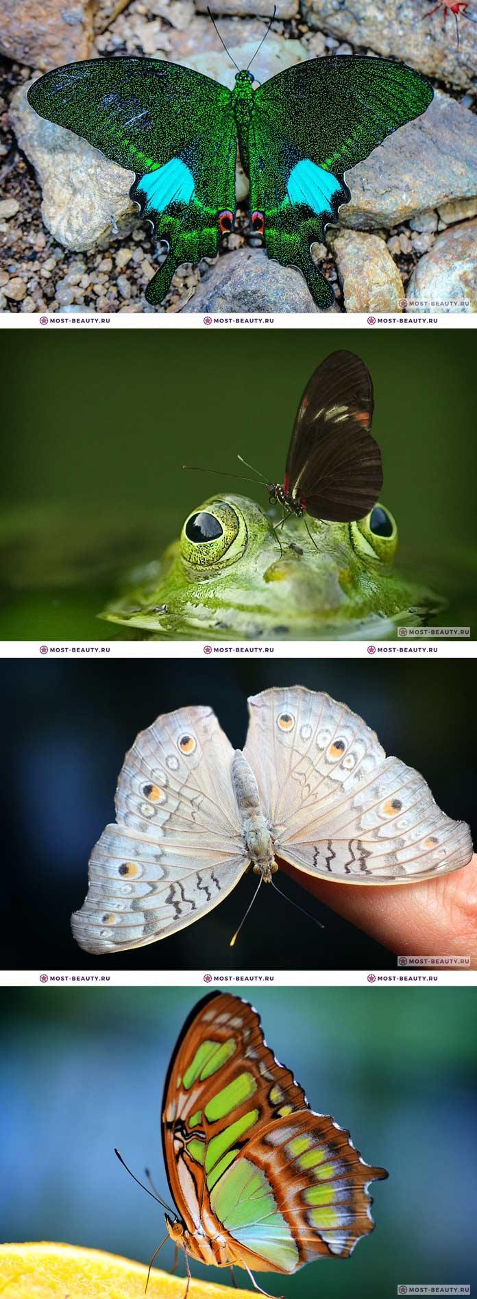 Самые красивые бабочки фото (CC0)