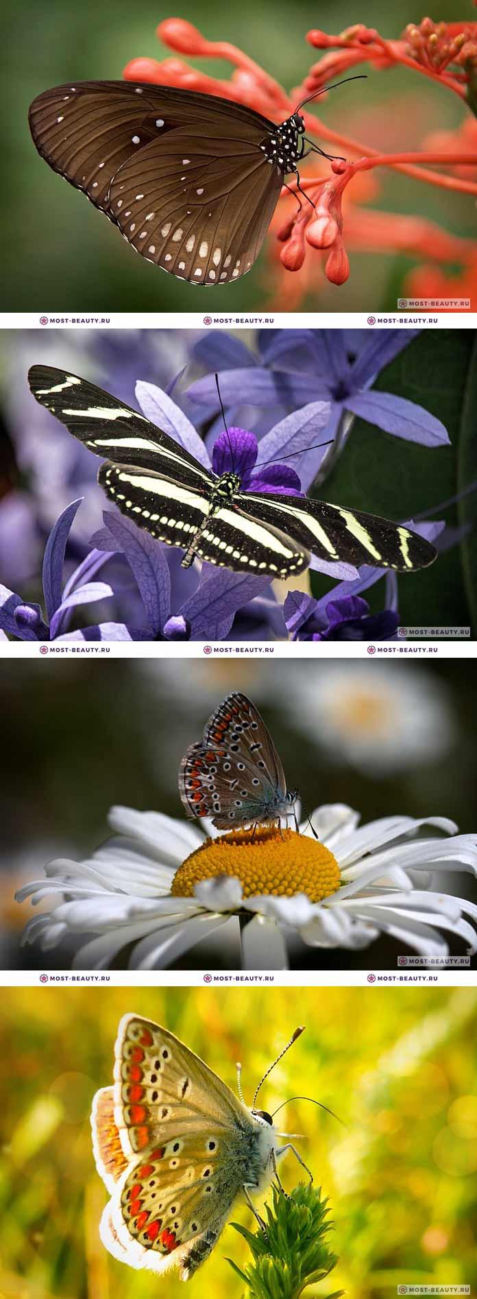 Самые красивые бабочки на фотографиях (CC0)