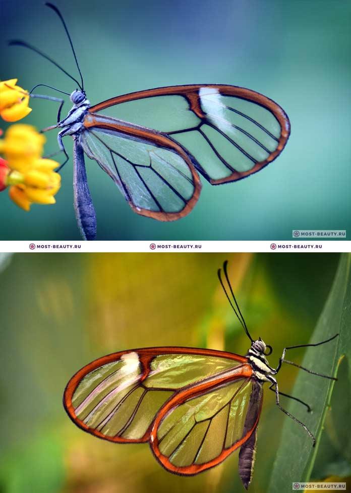 Самые красивые бабочки: Грета Ото (CC0)
