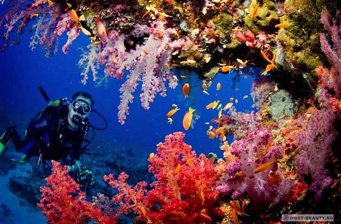 Самые красивые места на море: Коралловый барьер