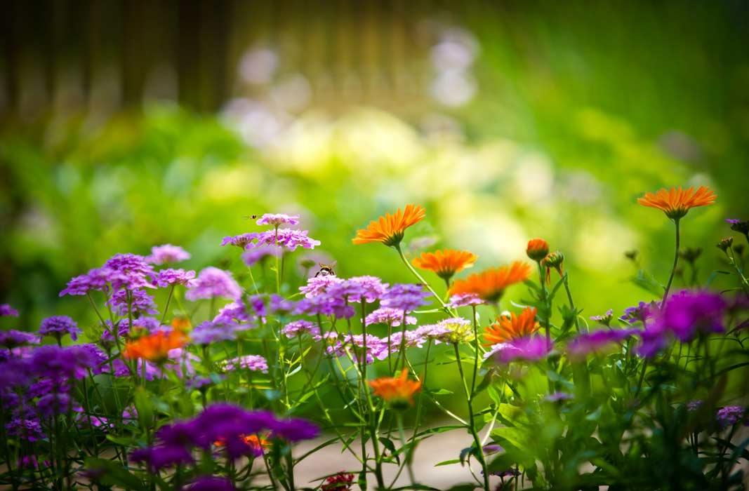 Фото цветка мак
