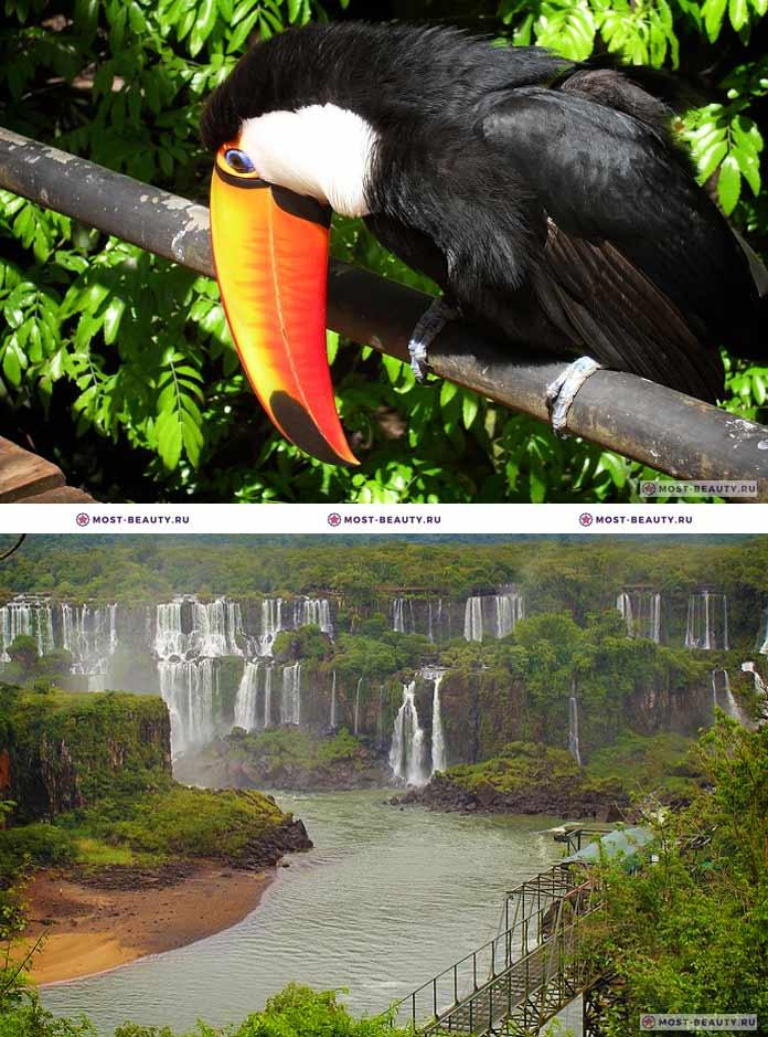 Самые красивые парки мира: Парк Игуасу