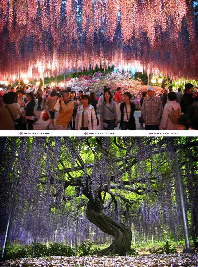 Самые красивые парки мира: Парк цветов «Асикага»