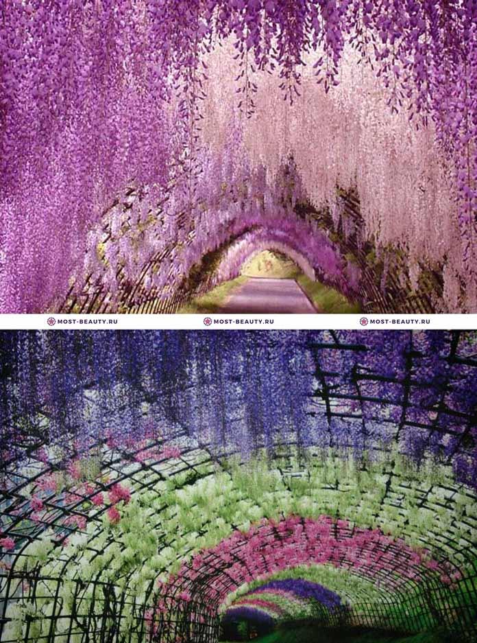 Парк цветов «Асикага»