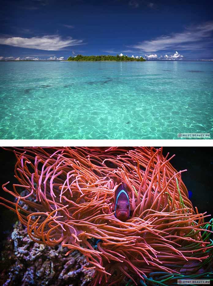 Коралловое море. CC0