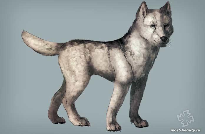 Ньюфаундлендский Волк