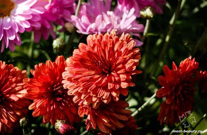 Красивые цветы для сада: Цветник. CC0
