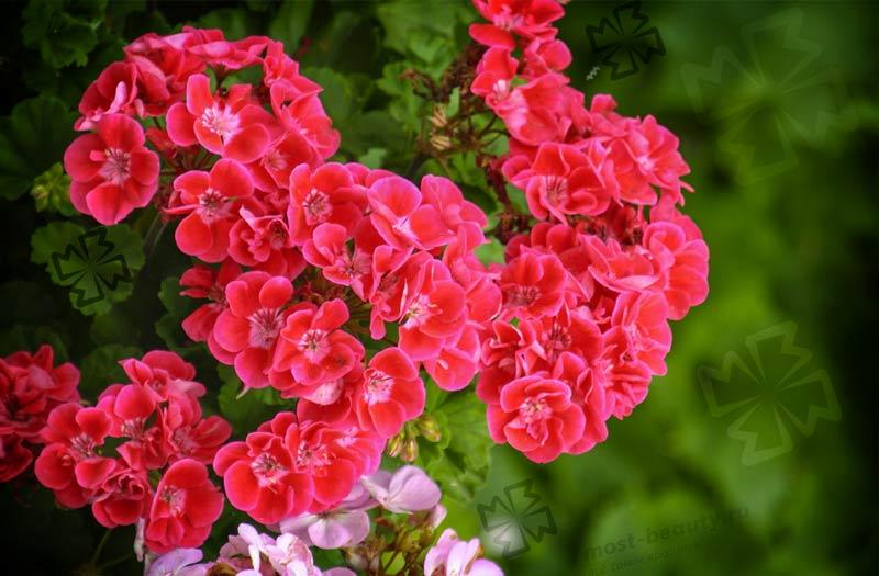 Цветы для сада. CC0