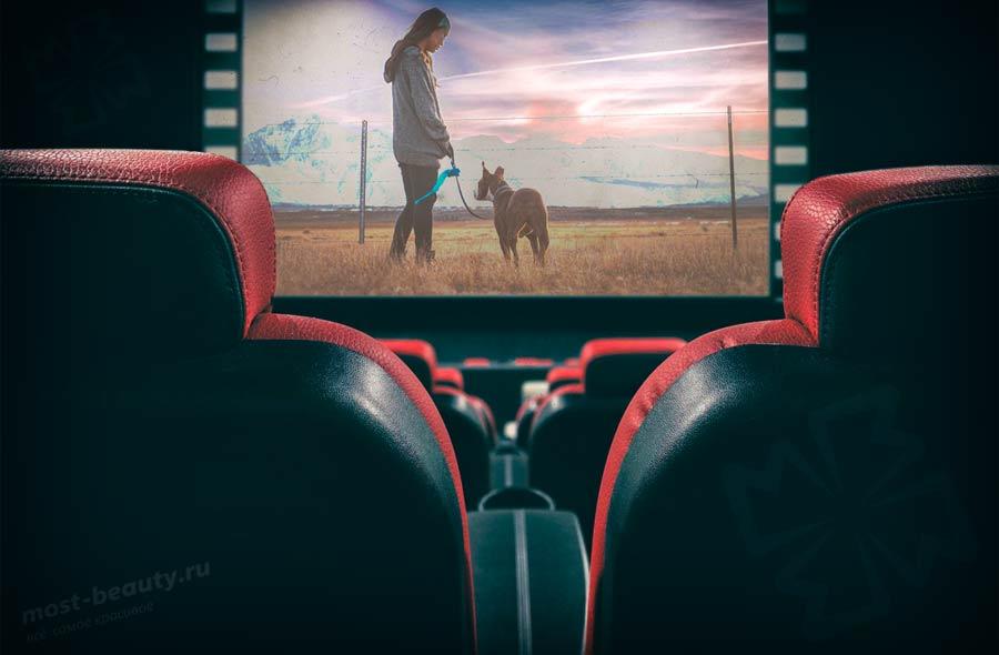 Фильмы про собак. CC0