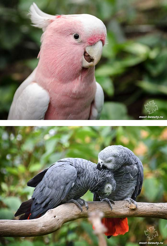 Красивые фото попугаев. CC0