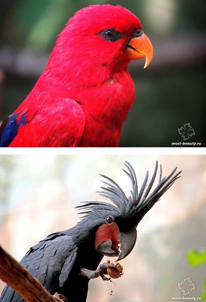 Очень красивые фото попугаев. CC0
