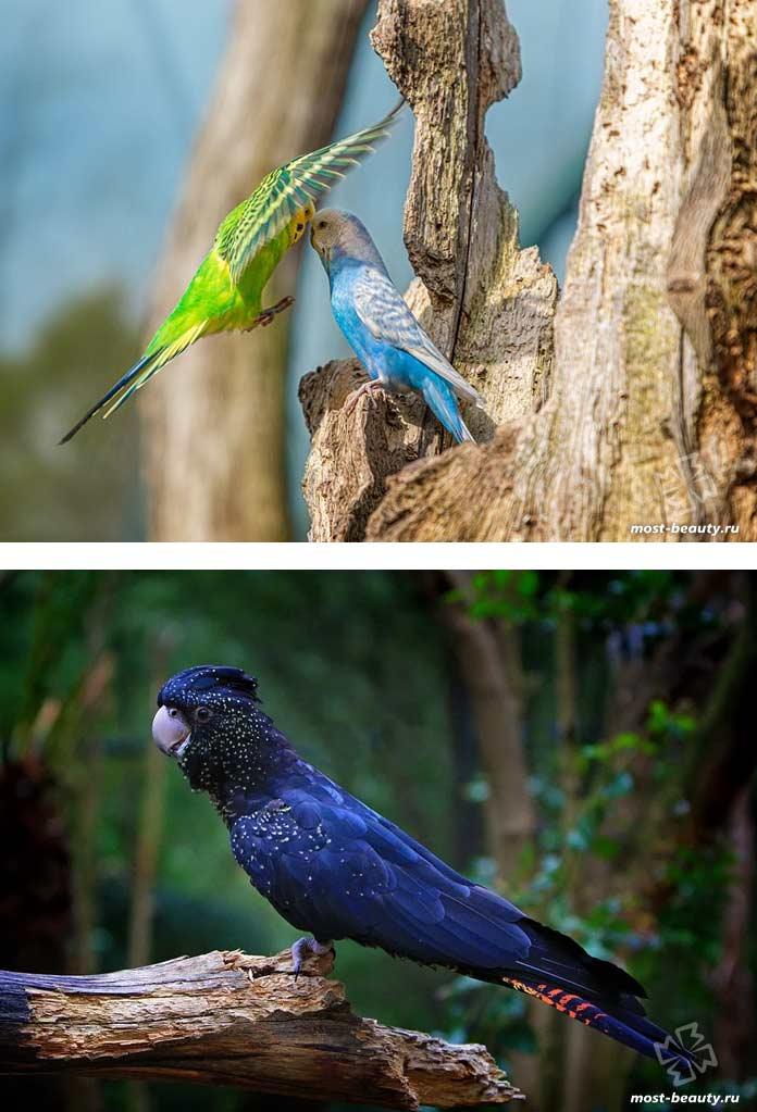 Очень красивые попугаи на фотографиях. CC0