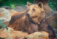 Медведь. CC0