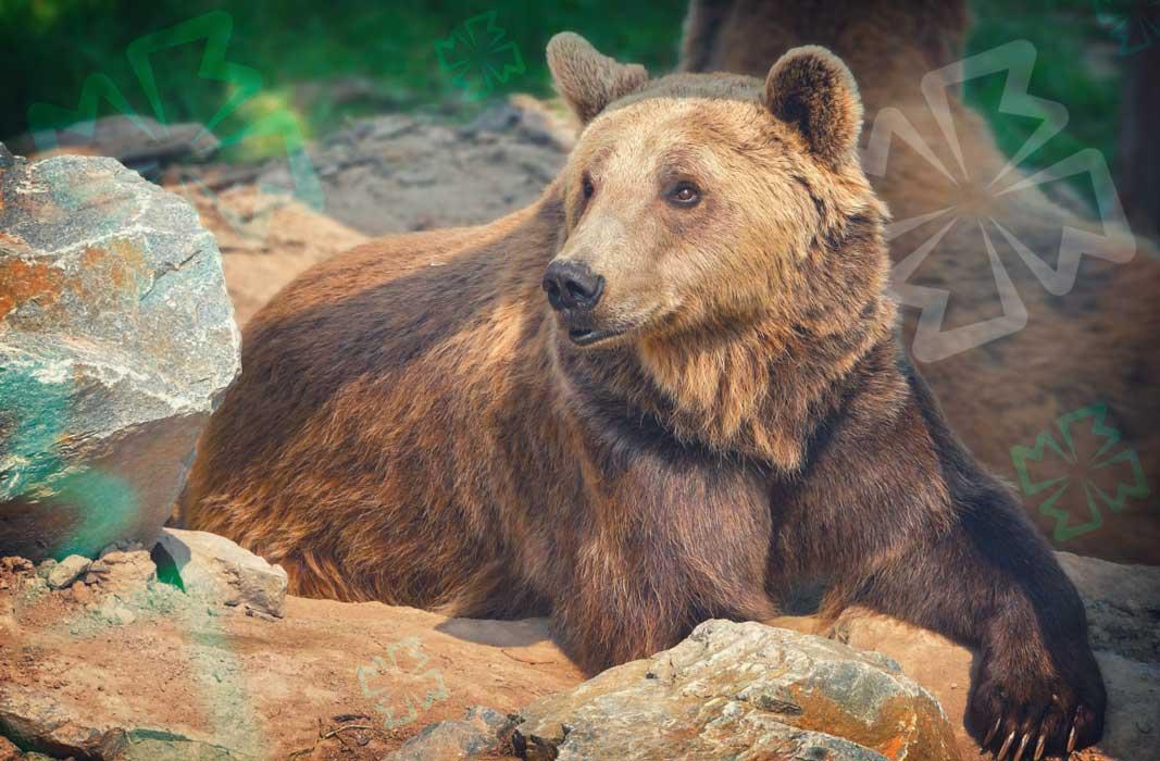 Спаси медведей!