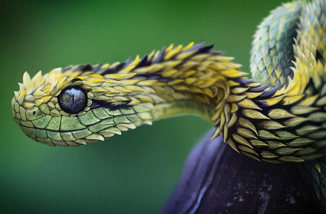 Виды змей и их названия с фото. От безобидных ужей до смертоносной чёрной мамбы