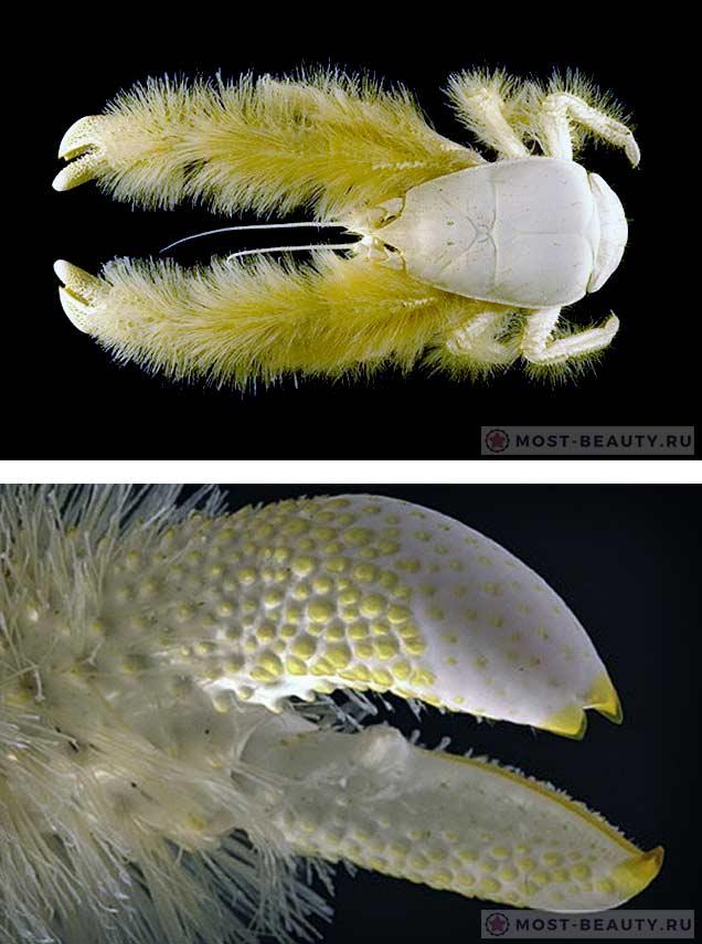 Ужасные морские существа: Краб-йети