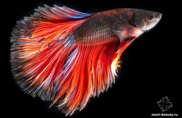 Очень красивые рыбы на фото. CC0