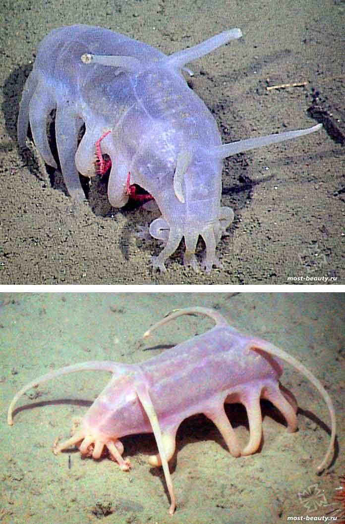 Фантастические морские существа: Морская свинья