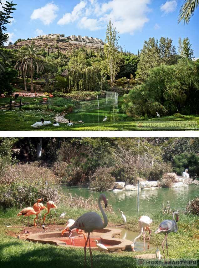 Зоопарк Иерусалима