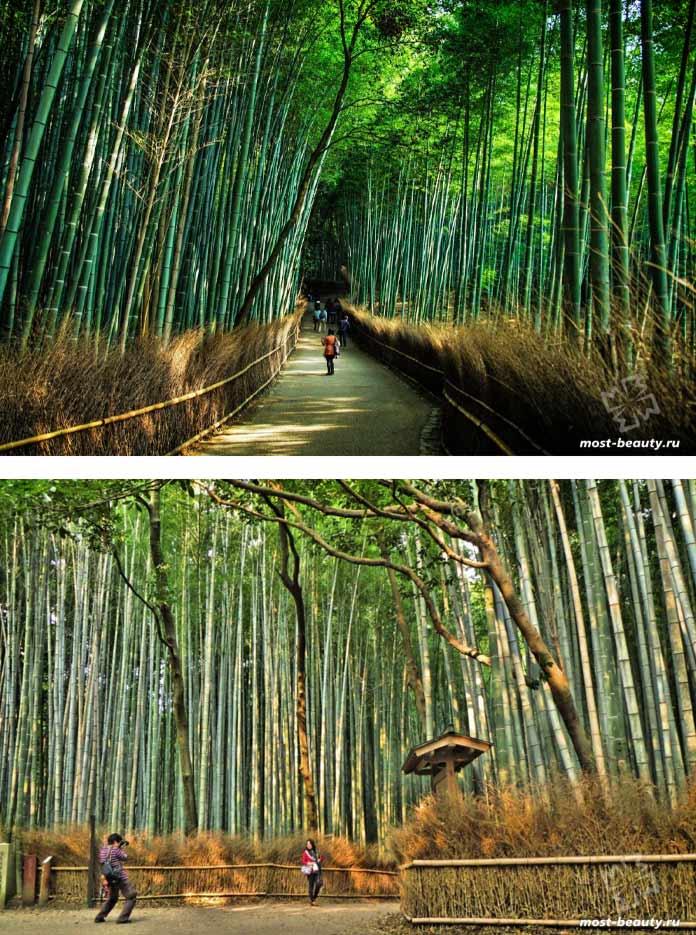 Бамбуковая роща Сагано - одно из самызх красивых мест Японии. CC0