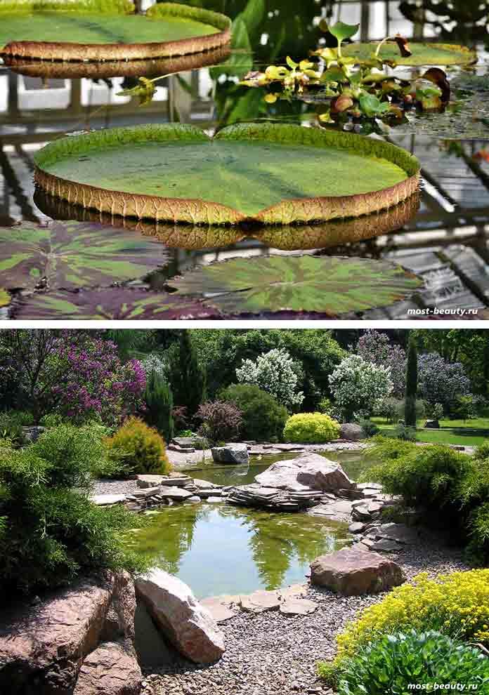 Харьковский ботанический сад