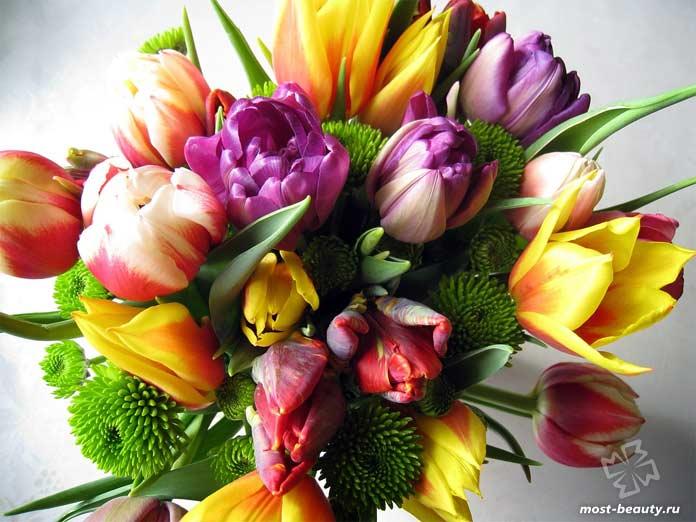 Красивые тюльпаны в букете. CC0