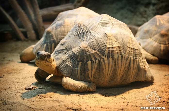 Очень красивая черепаха. CC0