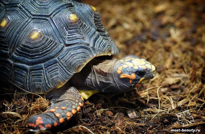 Черепаха. CC0
