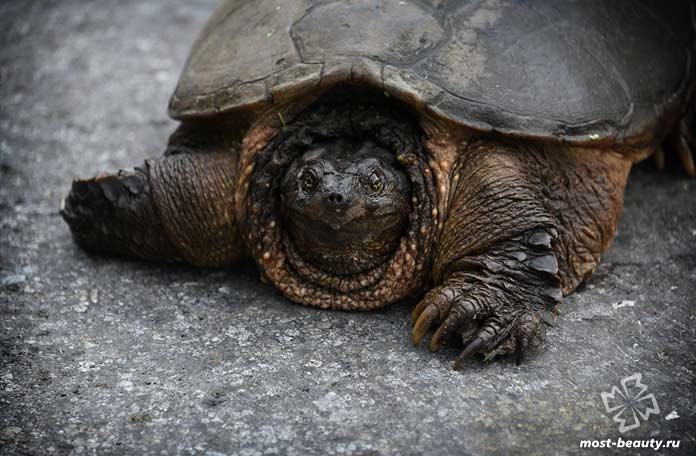 Очень необычная черепаха. CC0